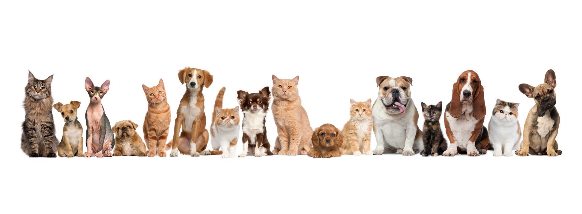 cani-gatti-2